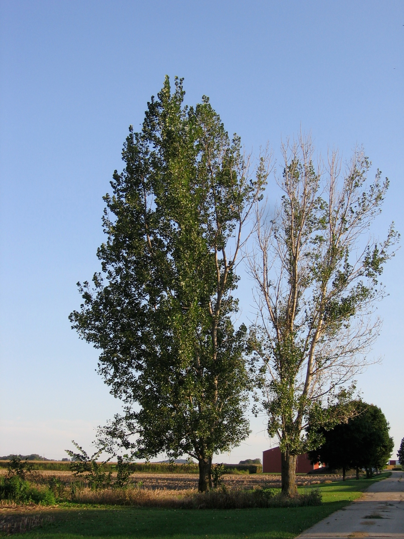 Which Trees Are Used To Make Paper